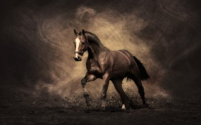 Обои Жеребец: Конь, Жеребец, Лошади