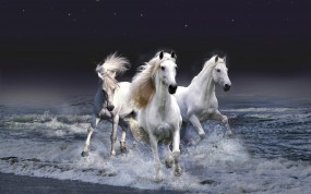 Обои Белые лошади бегущие по волнам: Волны, Вода, Лошадь, Лошади