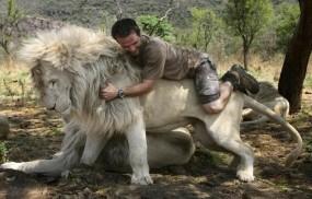 Обои Кевин Ричардсон на льве: Человек, Лев, Львы
