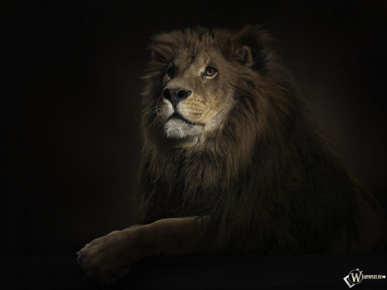 Animals Wallpaper 3d Hd 2 0 Apk Download: Скачать обои Лев на черном фоне (Зверь, Царь зверей