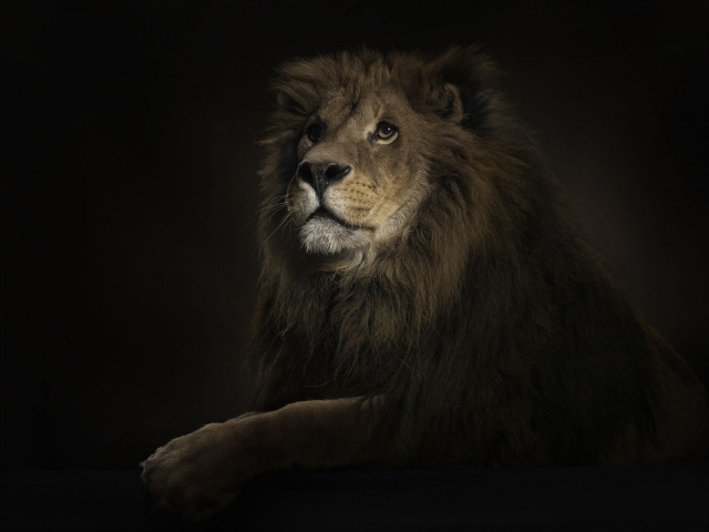 фотообои львы: