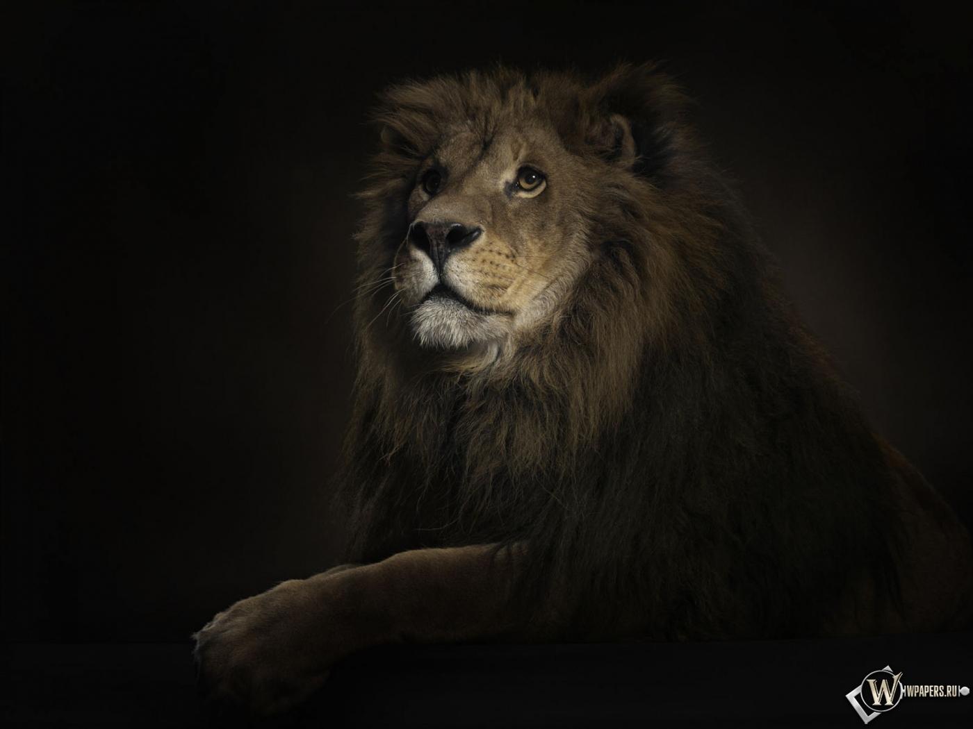 Обоев 1 король лев обоев 2 лев обоев 50