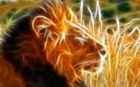 Обои Огненный Лев: Огонь, Лев, Львы