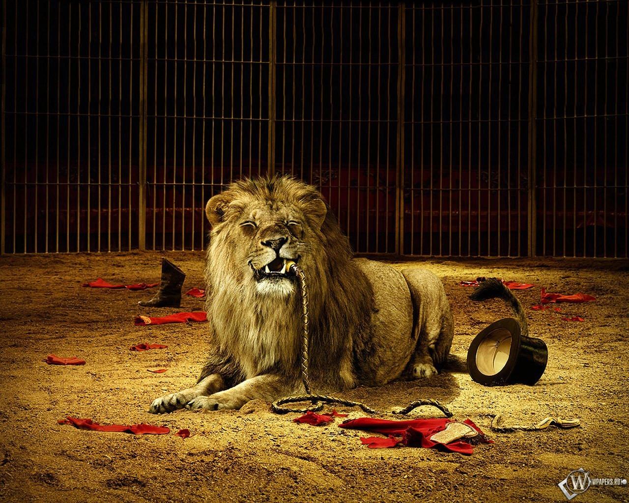 Лев с плеткой 1280x1024