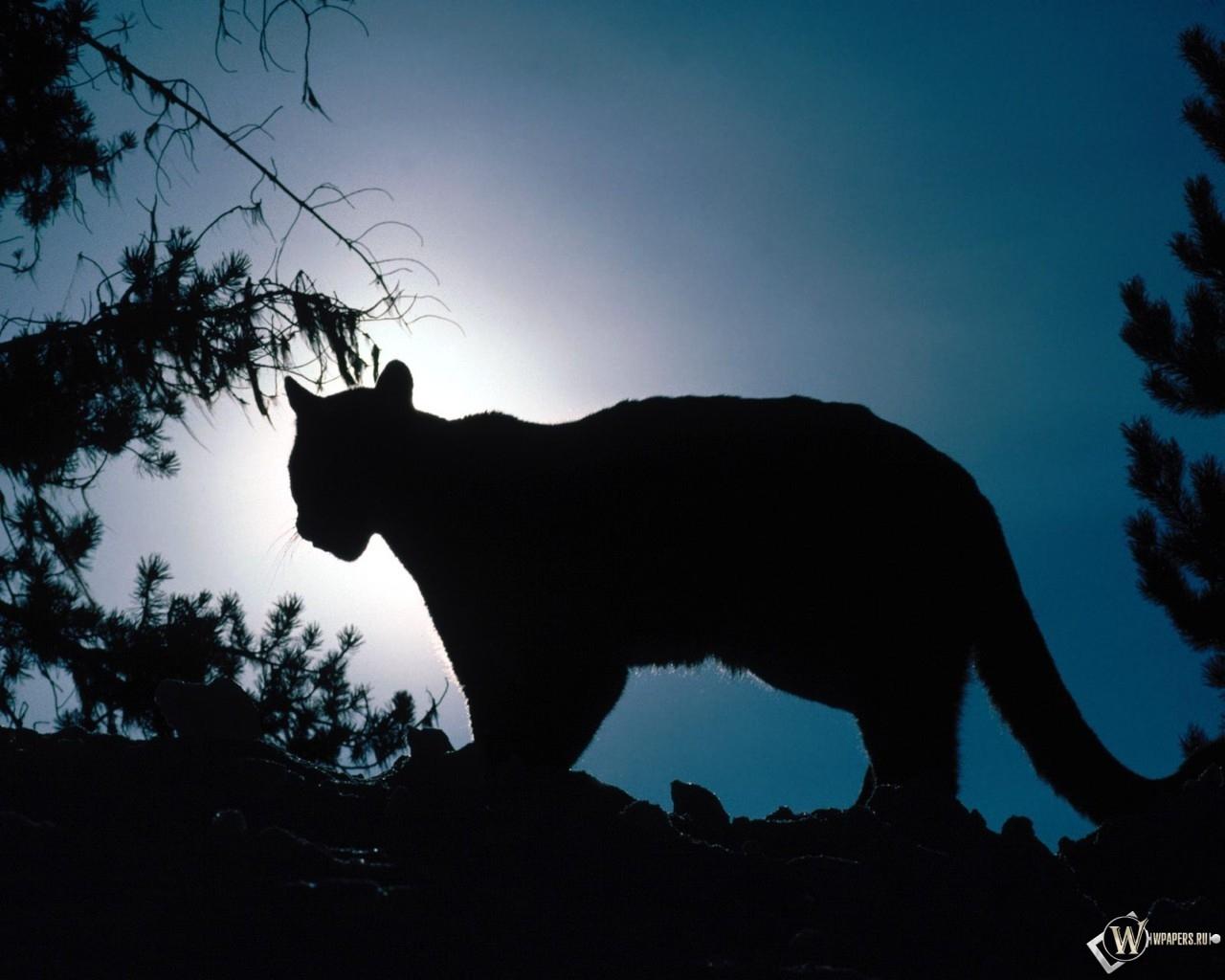 Леопард на фоне луны 1280x1024