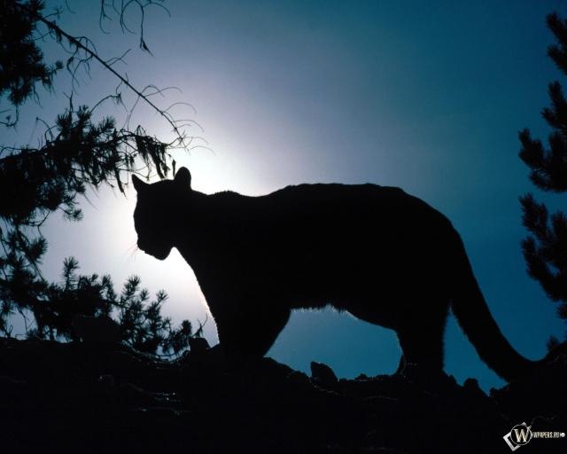 Леопард на фоне луны