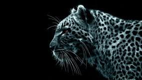 Обои Рисованный Леопард: Леопард, Чёрный фон, Леопарды