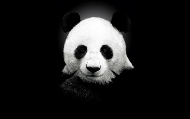 Панда на черном фоне