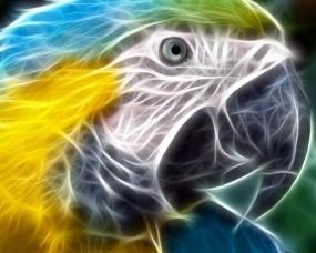 Обои Неоновый попугай: Неон, Рендеринг, Попугай, Попугаи