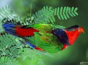 Обои Разноцветный попугай: , Попугаи