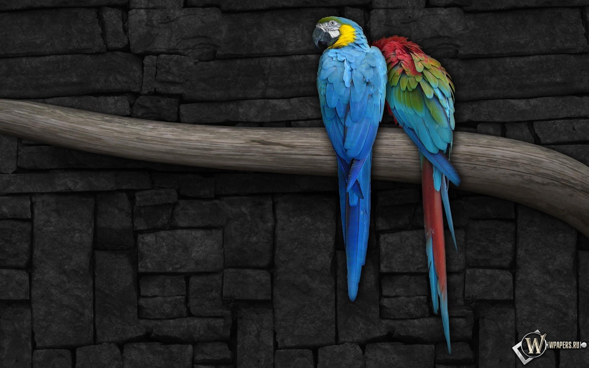 Попугаи на ветке 1920x1200