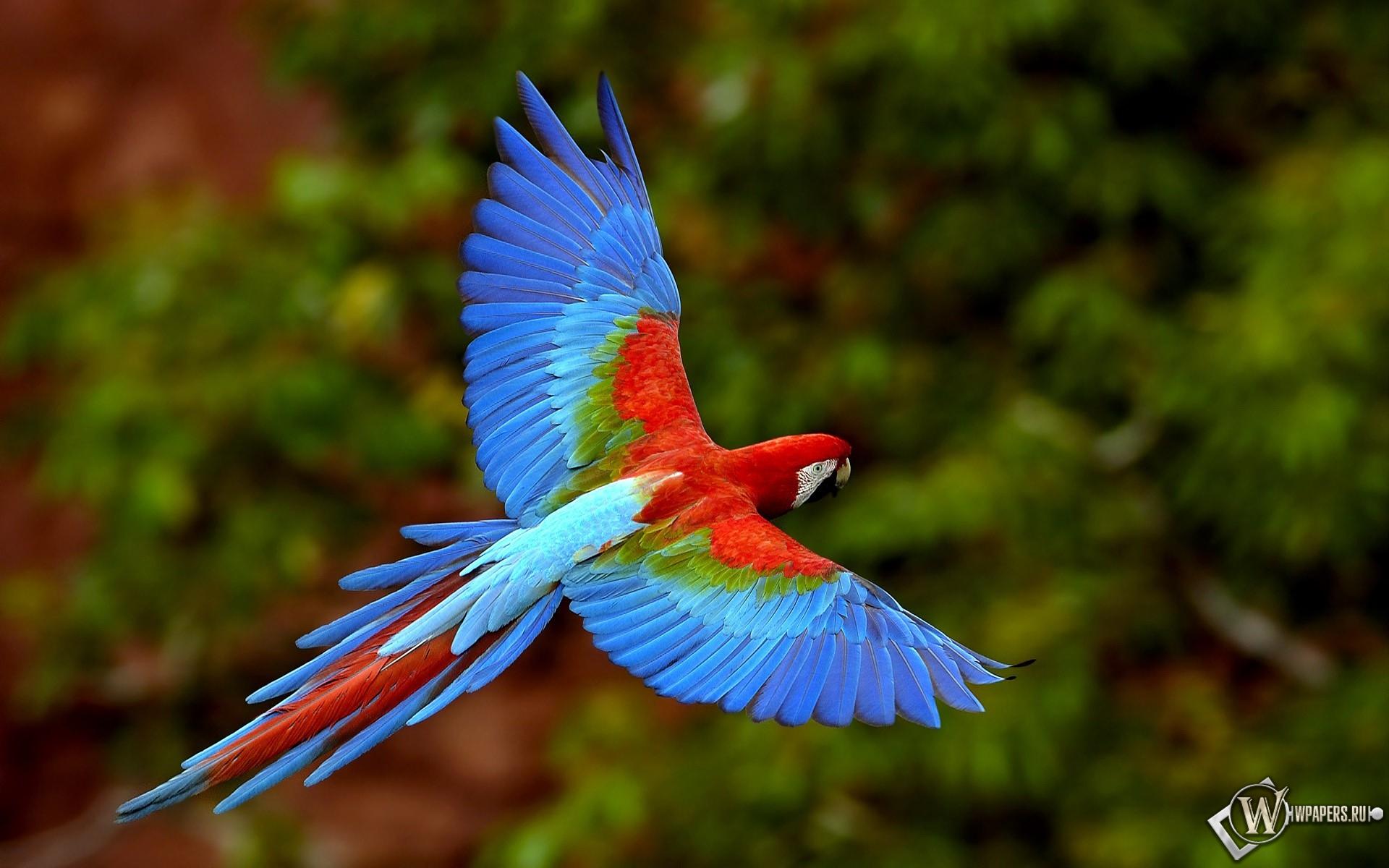 Яркий попугай 1920x1200