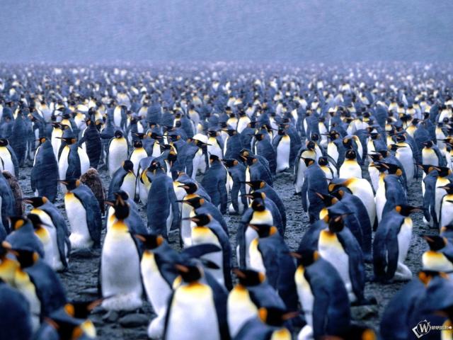 Сборище пингвинов