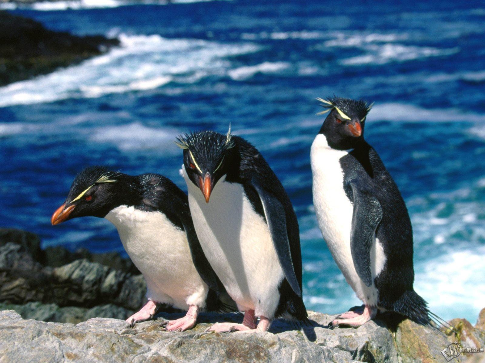 Трое пингвинов 1600x1200