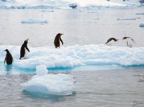 Обои Пингвины на льдине: , Пингвины