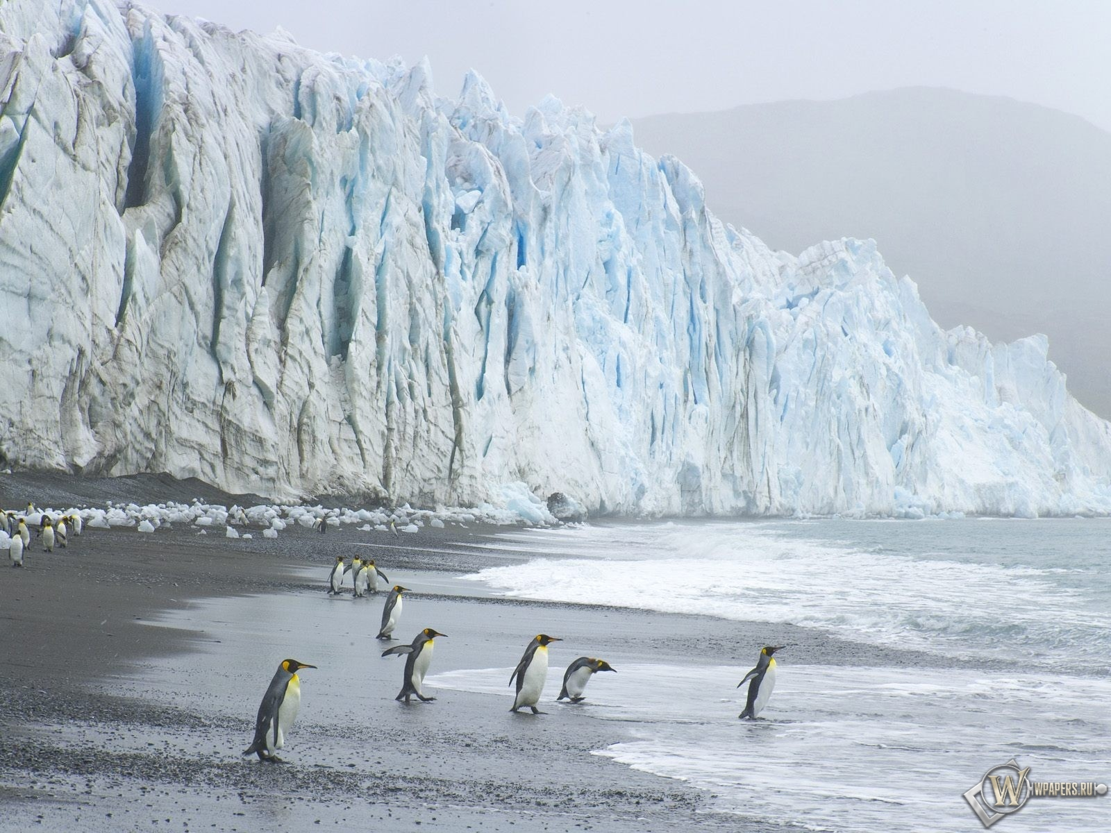 Пингвины на леднике 1600x1200