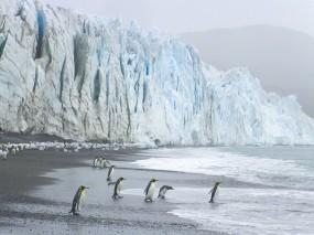 Обои Пингвины на леднике: Волны, Ледник, Пингвины, Пингвины