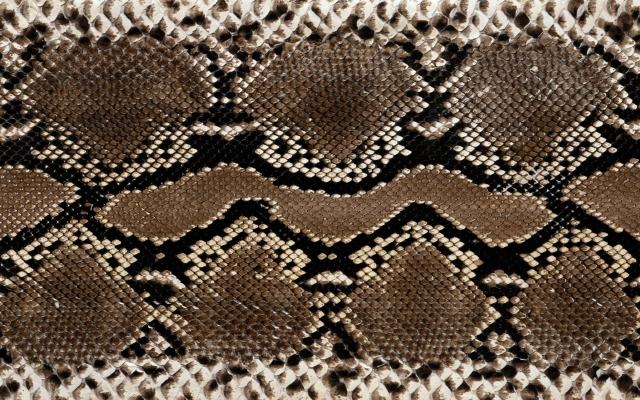 Кожа змеи