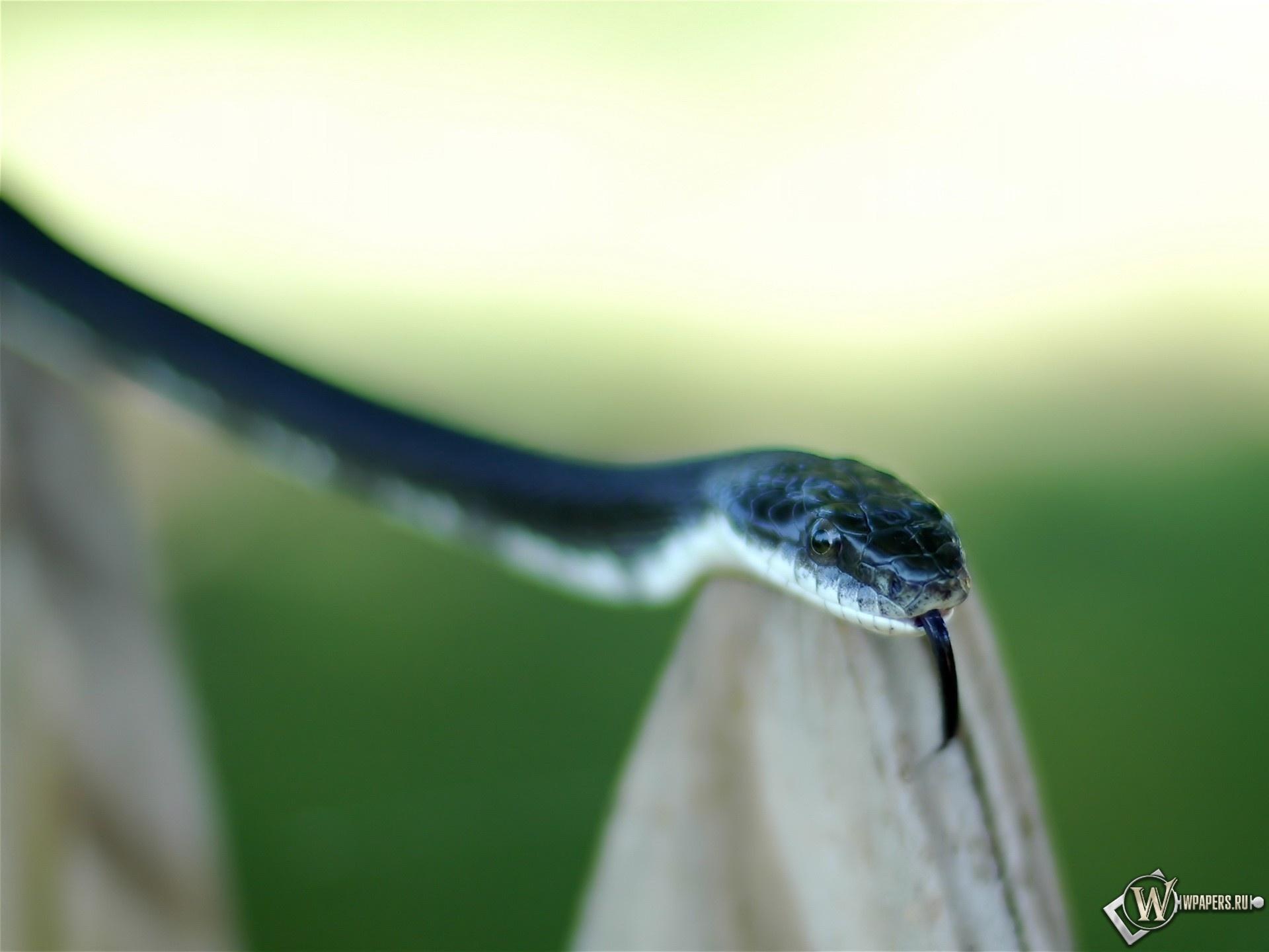 Синяя змея 1920x1440
