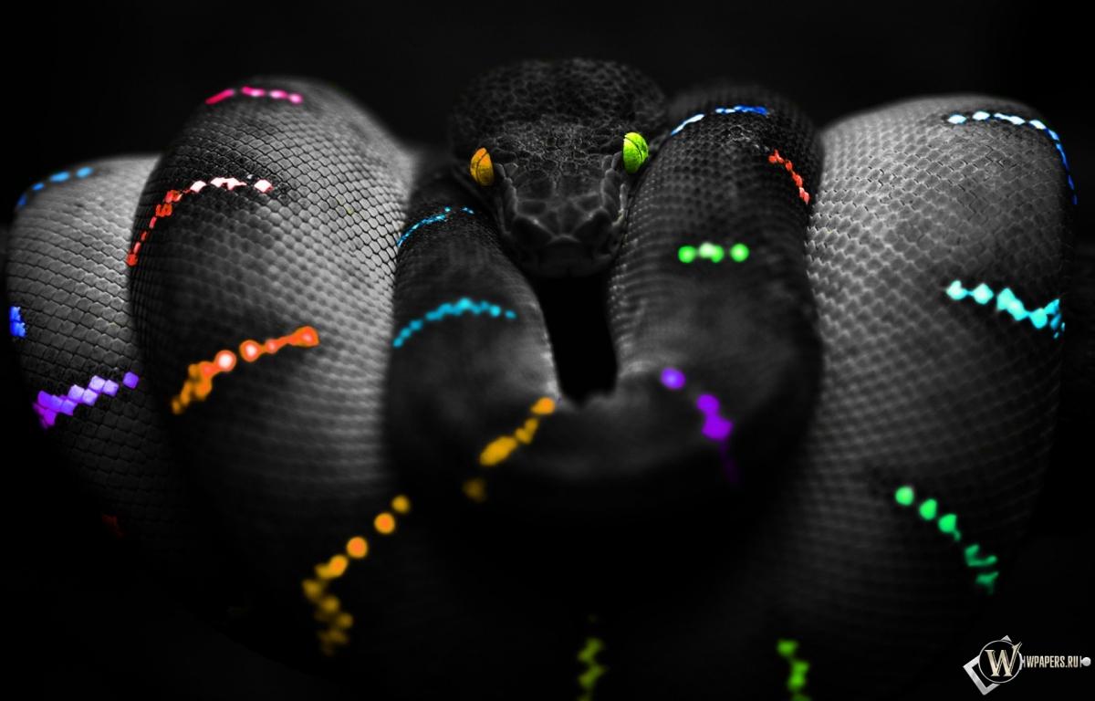Змеи обои на рабочий стол 1920х1080 5