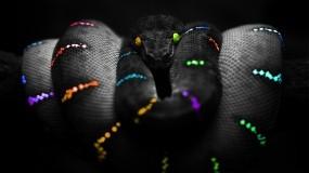 Обои Цветная змея: Змея, Цвета, Змеи