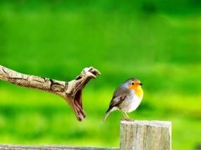 Капец птичке