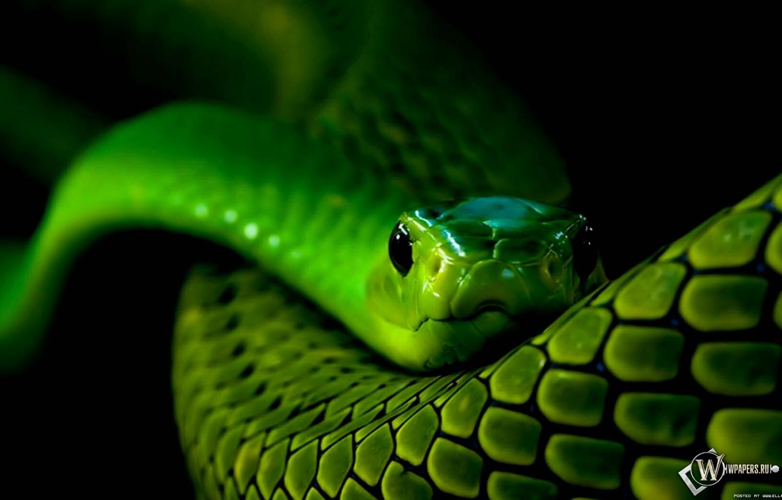 Самые красивые змеи в мире   много Фото змей