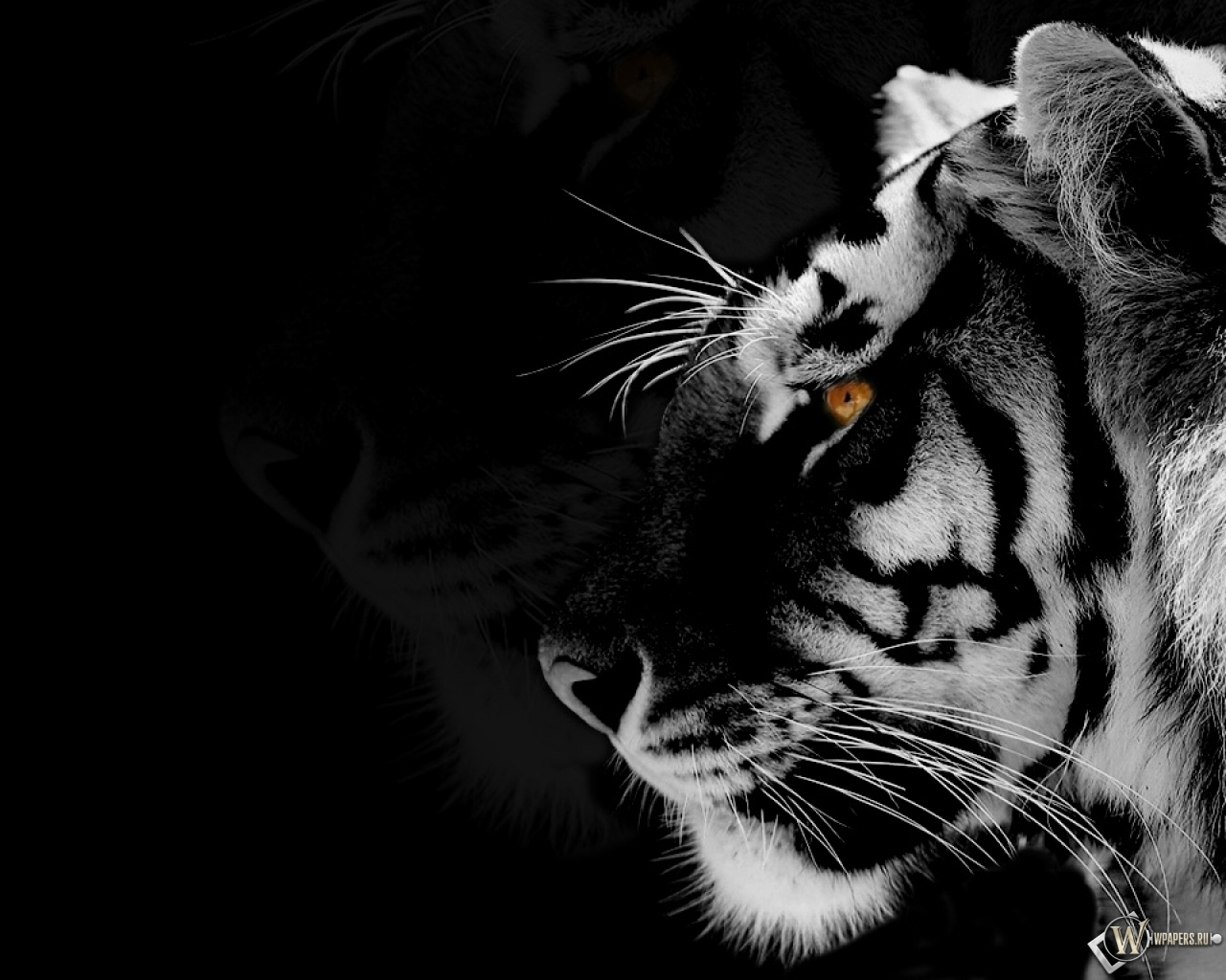 """white tiger research paper """"the white tiger"""" by aravind adiga is a piece of literature that talks about india left and right a book that can be half fiction half true."""