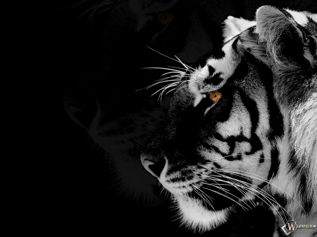 Black Tiger Wallpaper Widescreen