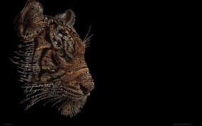 Обои Тигр из фраз: Чёрный, Тигр, Фон, Тигры