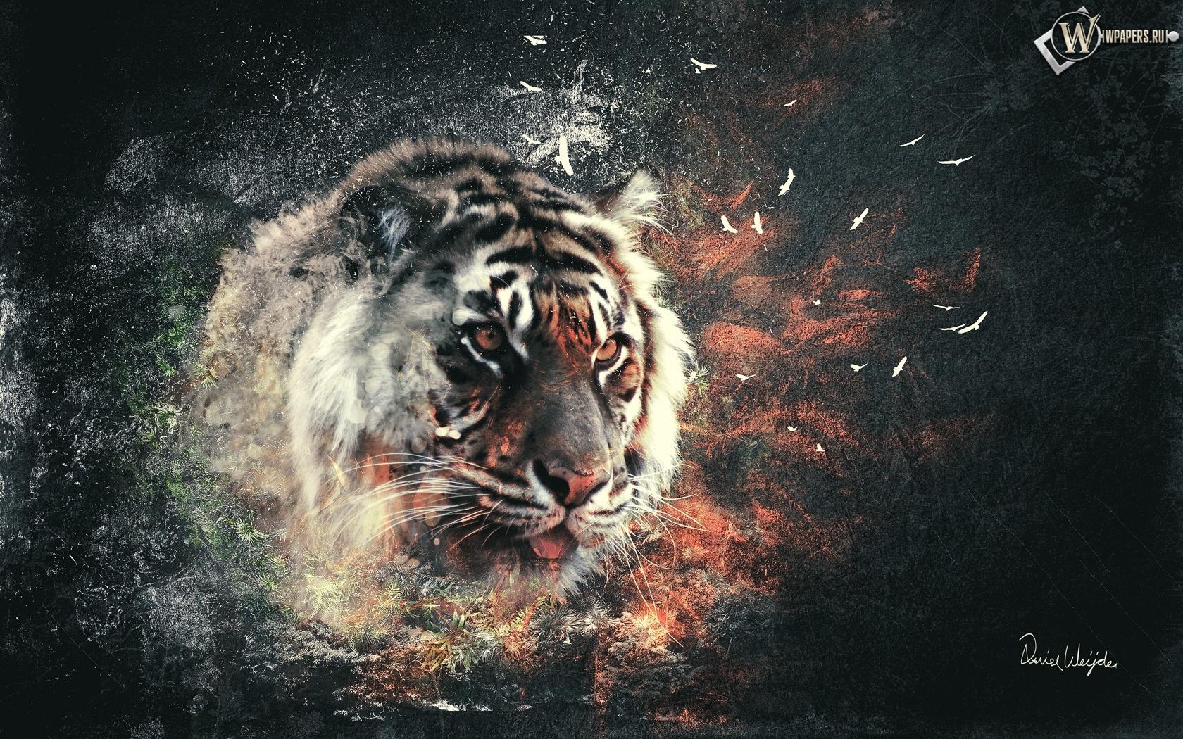 Тигр 1680x1050