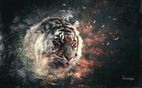 Обои Тигр: Взрыв, Кошка, Тигр, Тигры