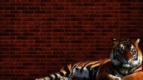 Обои Тигр у стены: Стена, Тигр, Кирпич, Тигры