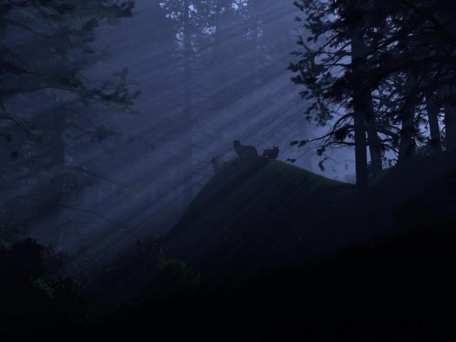 Волки ночью