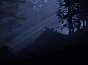 Обои Волки ночью: Свет, Лес, Ночь, Волки, Волки