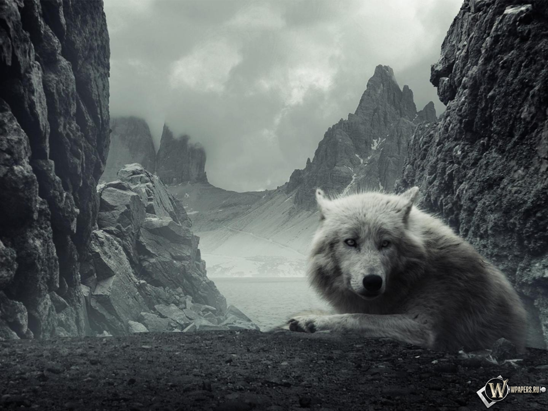 ... волк Горы, Волк, Белый на рабочий стол: wpapers.ru/wallpapers/animals/Wolfs/15269/1920-1440_%C3%83%C2%90%C3...