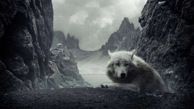 Белый волк горы обоев 271 волк обоев 51