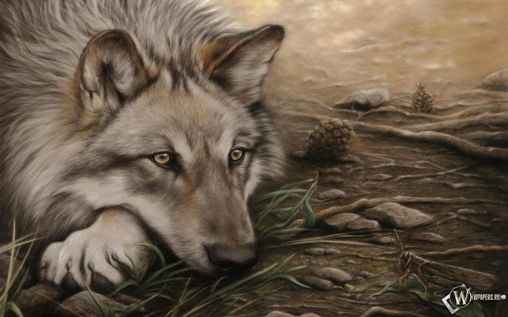 Волк-одиночка 1920x1200