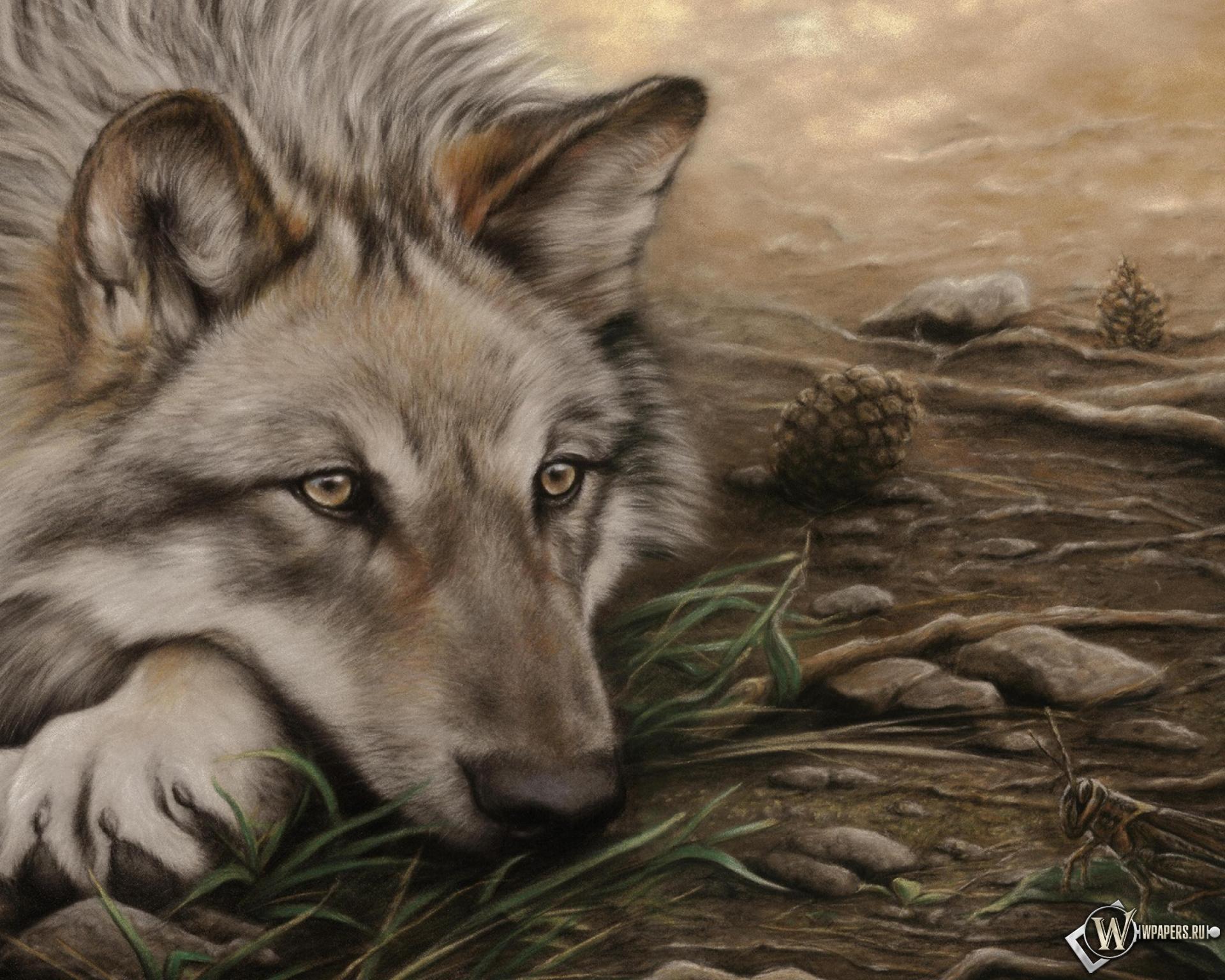 Волк одиночка скачать фото