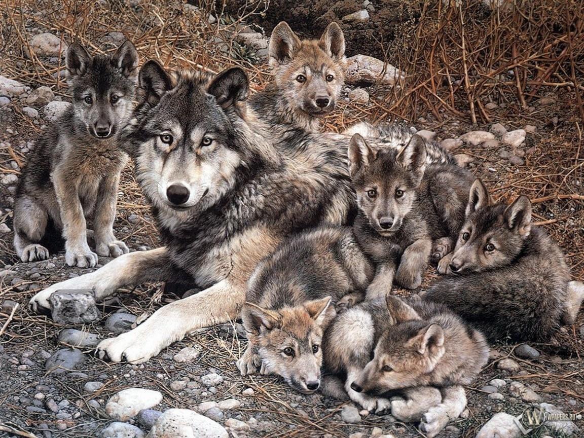 Волчица с волчатами 1152x864
