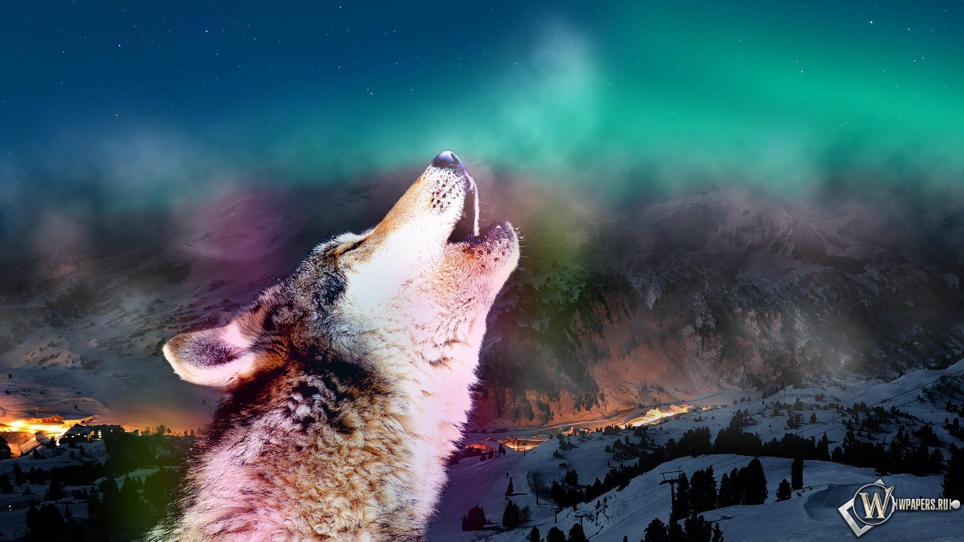 Обои воющий волк волк дыхание зов