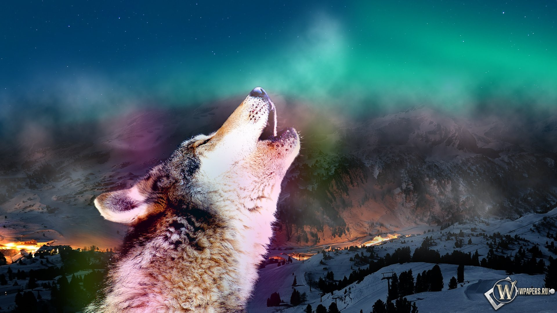 Воющий волк 1920x1080