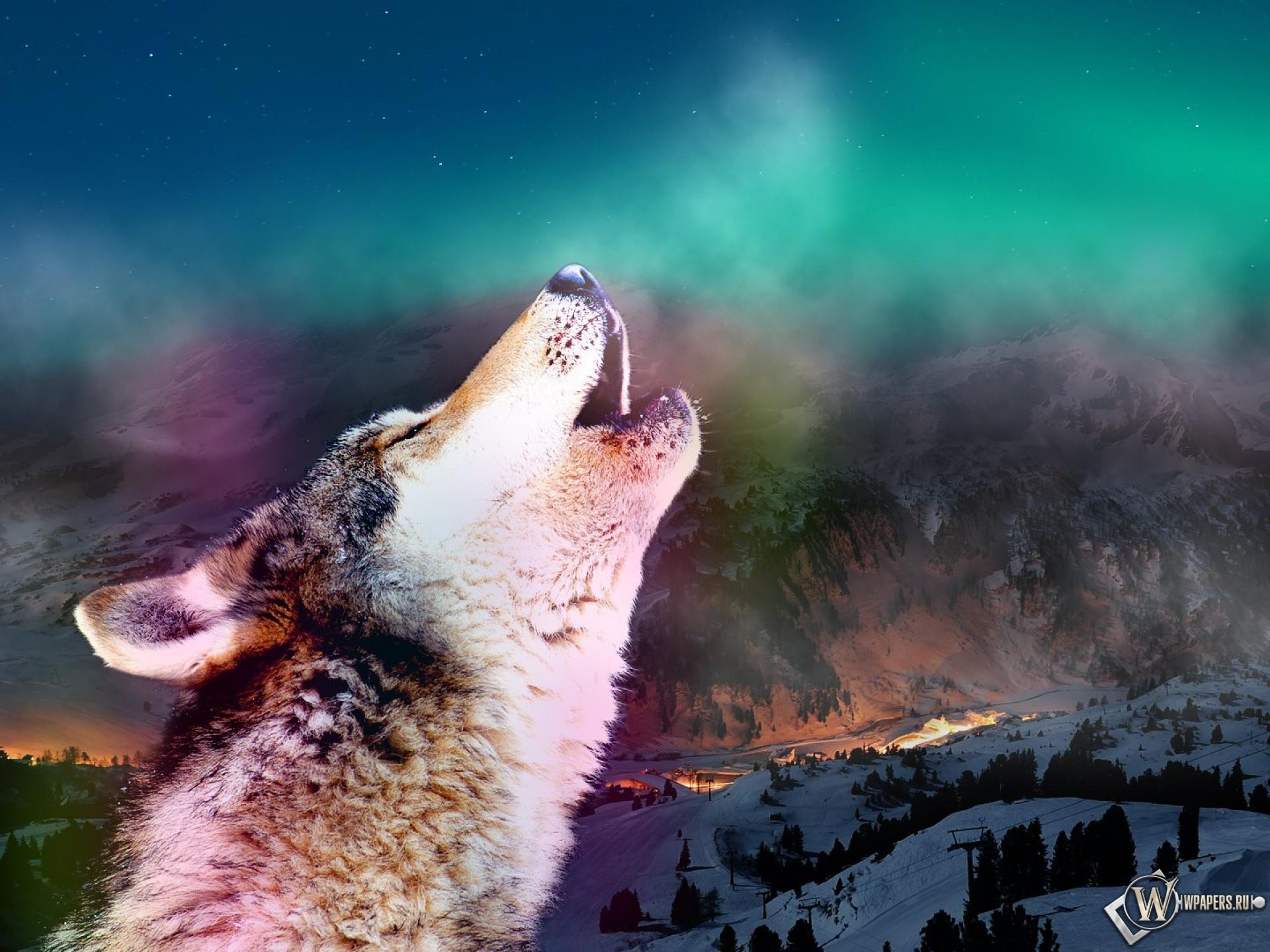 Волк волк обоев 51 дыхание обоев 2 зов