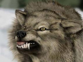 Обои скалящийся волк волк зубы оскал