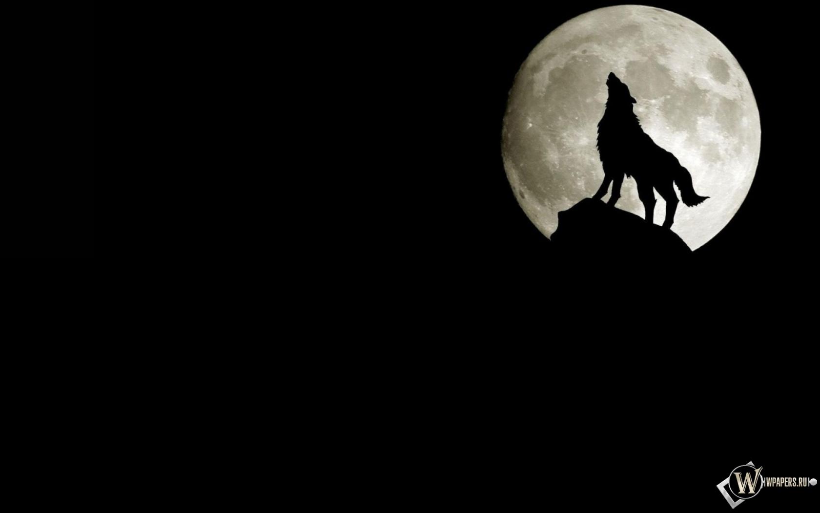 Обои волк на фоне луны на рабочий стол
