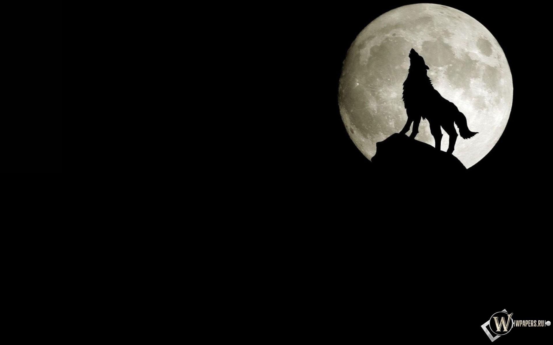 Волк на фоне луны 1920x1200