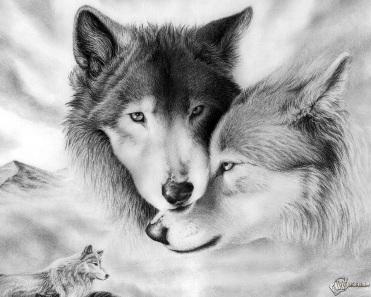 Волки стая связь 1280x1024 картинки