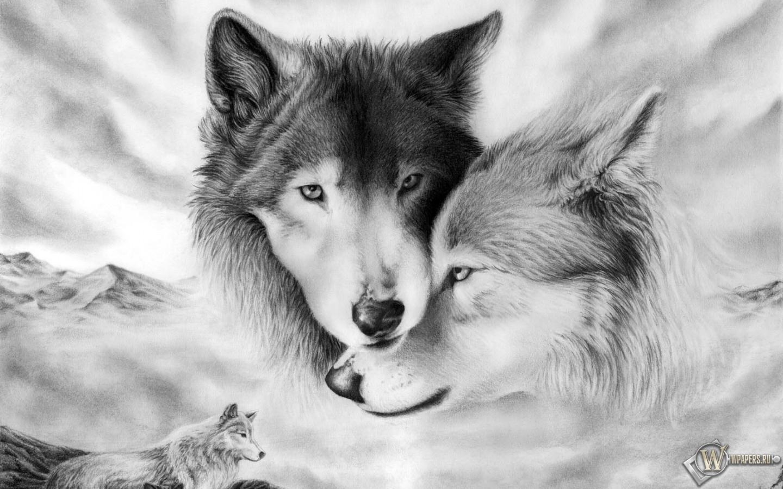 Волки 1440x900