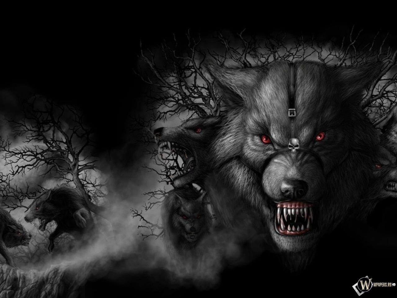 Волки живые обои на рабочий стол 8