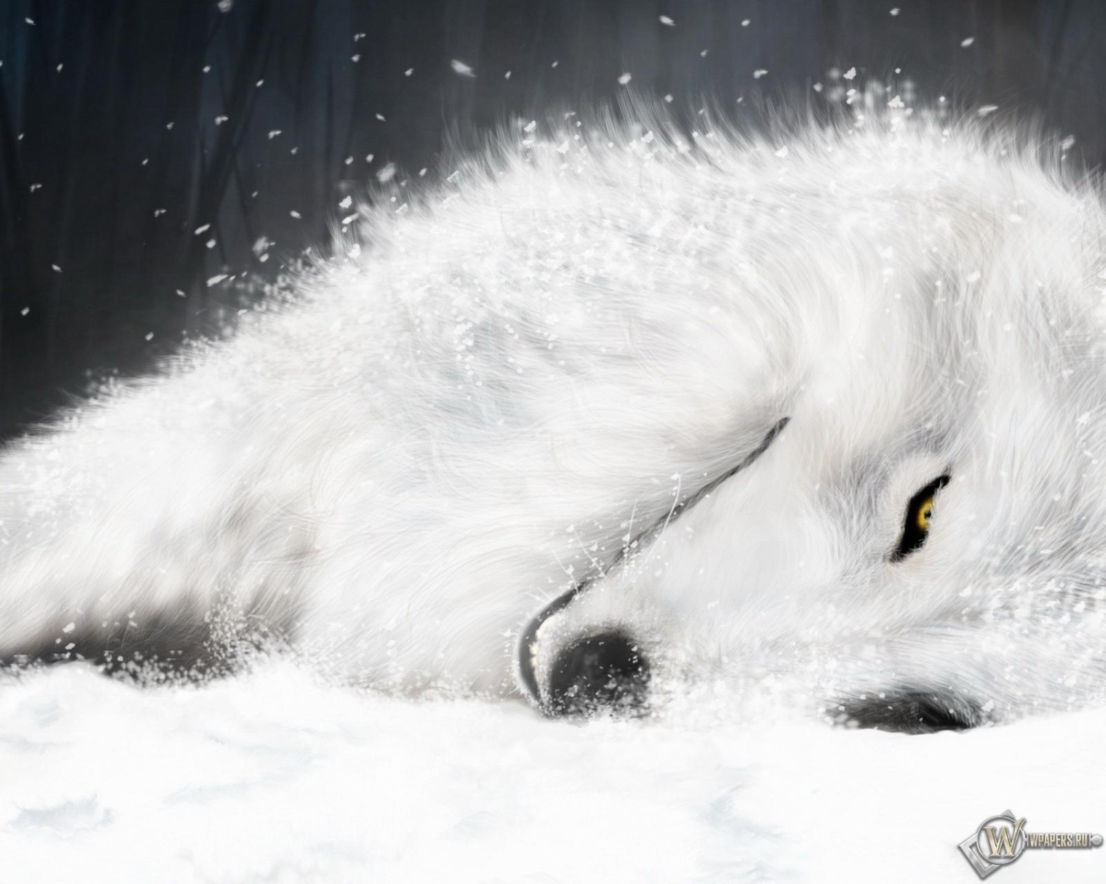 Обои волк отдыхает отдых белый волк